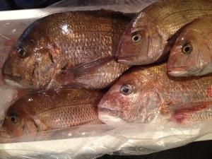 五島列島から水揚げされたばかりの鮮魚を直送。