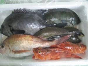 その日水揚げされた鮮魚を価格に応じて詰合せる「鮮魚詰め合わせセット」